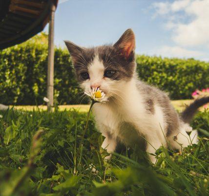 Imiona dla kotka
