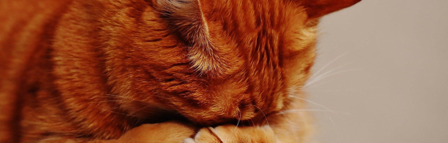 Po czym poznać że kot umiera
