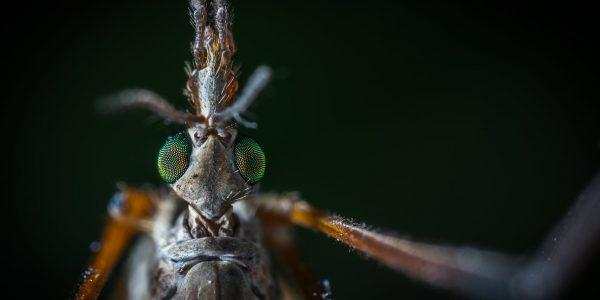 po co są komary