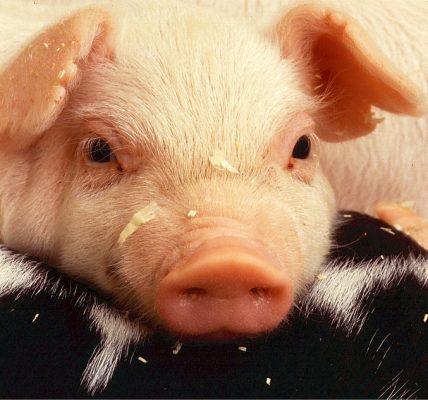 które zwierzęta się nie pocą