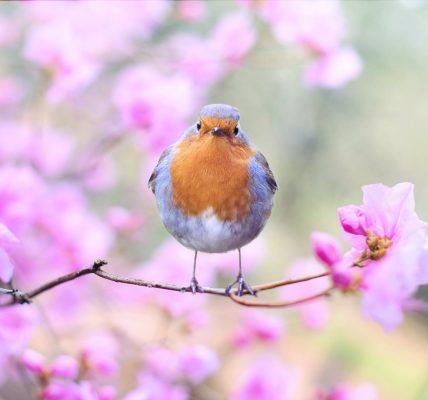 które zwierzęta budzą się na wiosnę?