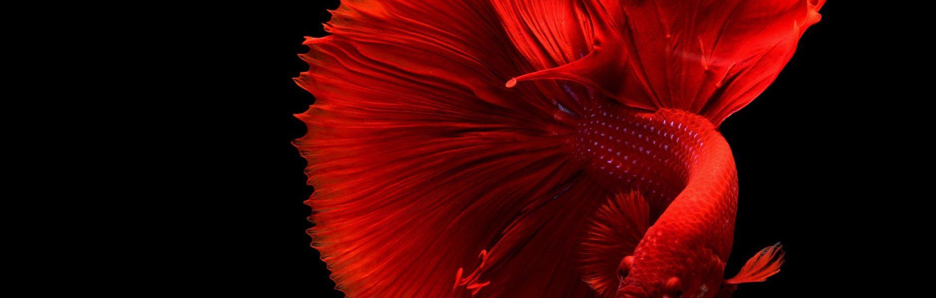 czy ryba ma serce?