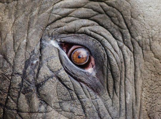 czy słoń boi się myszy