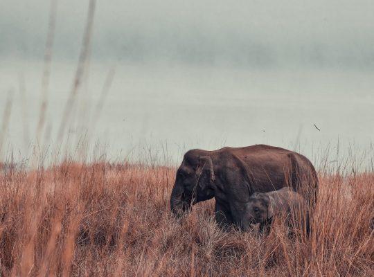 Ile waży słoń?
