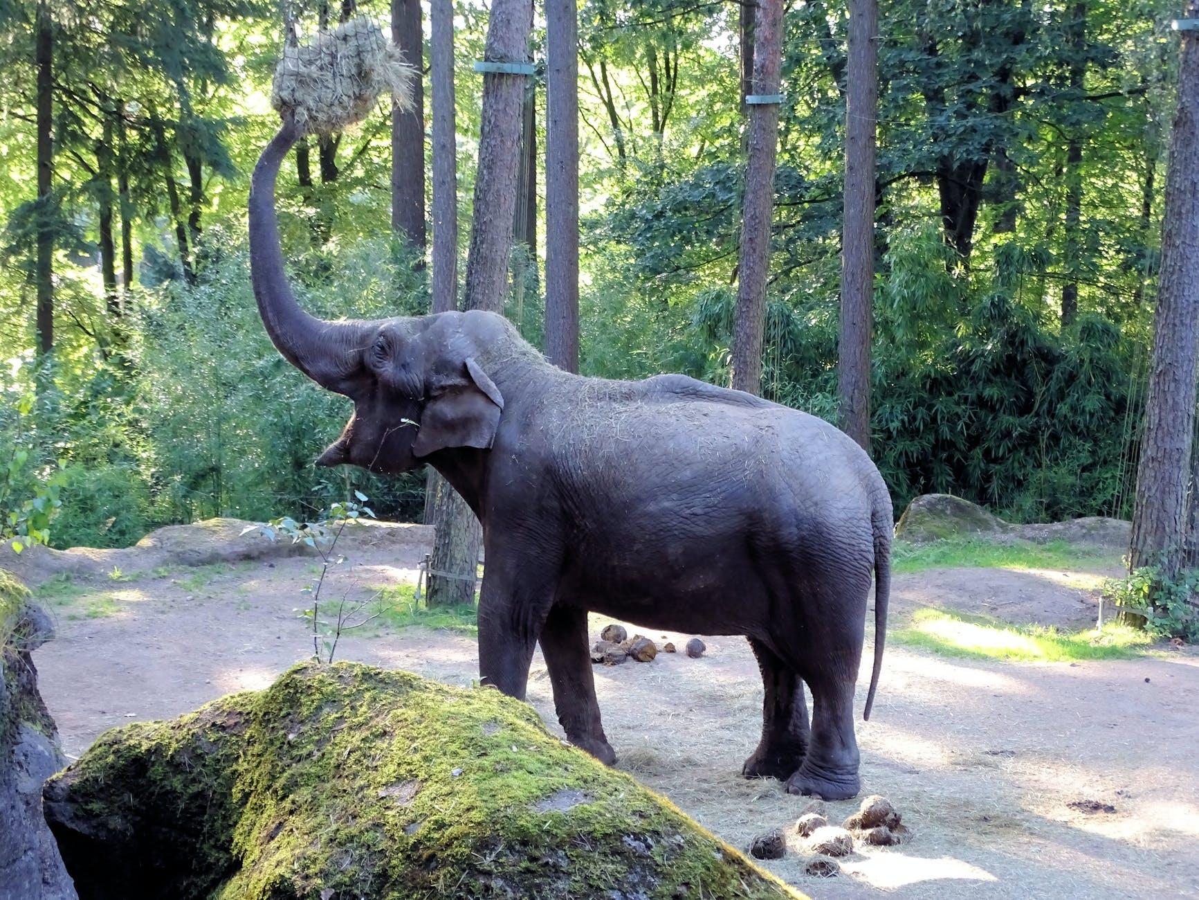 co je słoń?