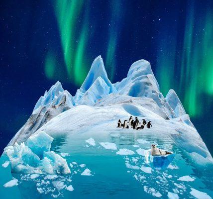 jakie zwierzęta żyją na antarktydzie