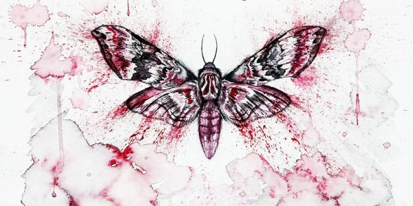 czy owady to zwierzęta?