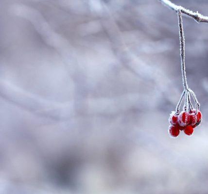 jakie zwierzęta zapadają w sen zimowy?