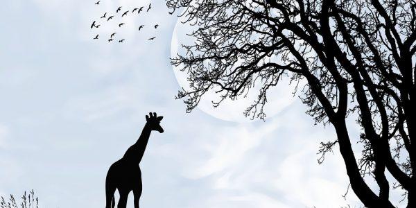 jakie zwierzę waży tonę?