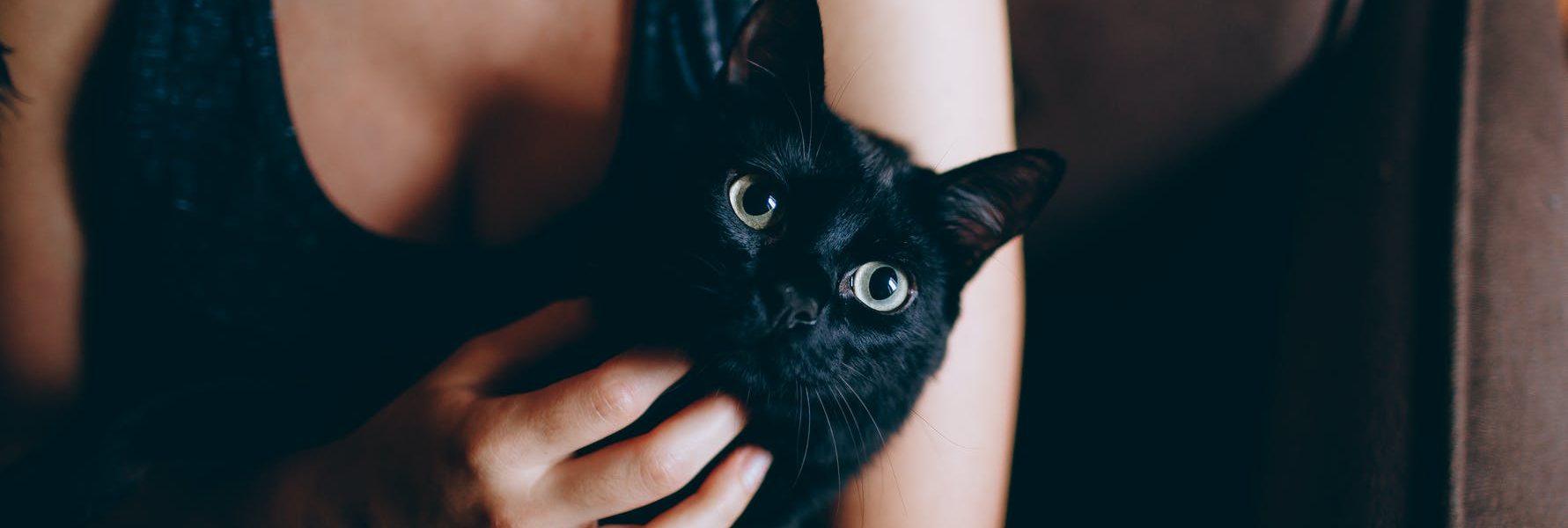 kim jest kot dla człowieka