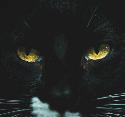 jakie kolory widzi kot?