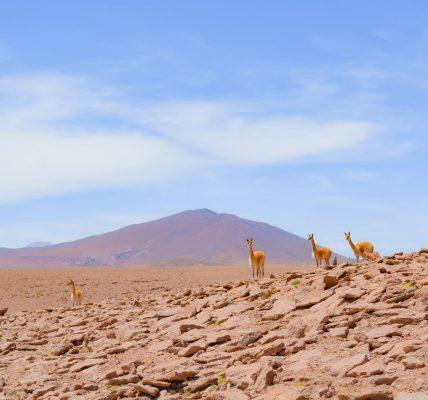 jakie zwierzęta żyją na pustyni