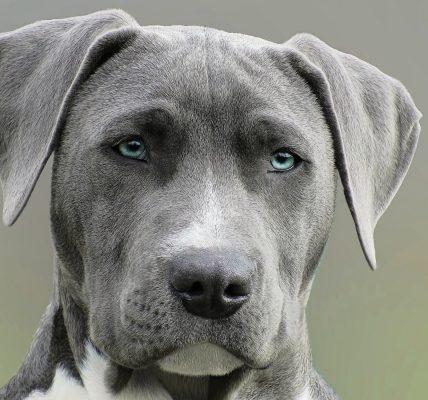jakie kolory widzi pies