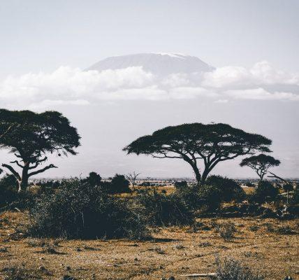 jakie zwierzęta żyją w Afryce