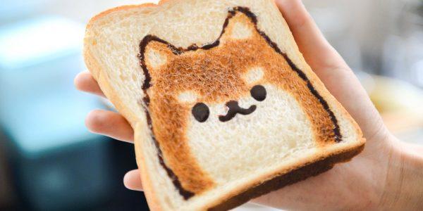Czy pies może jeść chleb?