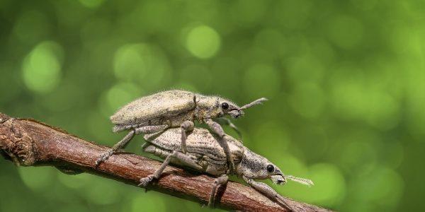 czy owady są zmiennocieplne?