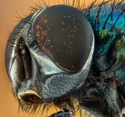Czy muchy są pożyteczne?