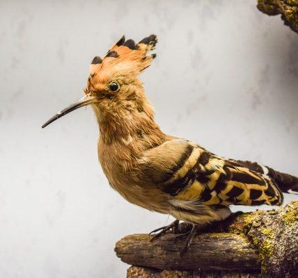 Ptak z długim dziobem