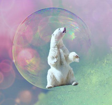 gdzie żyją niedźwiedzie polarne