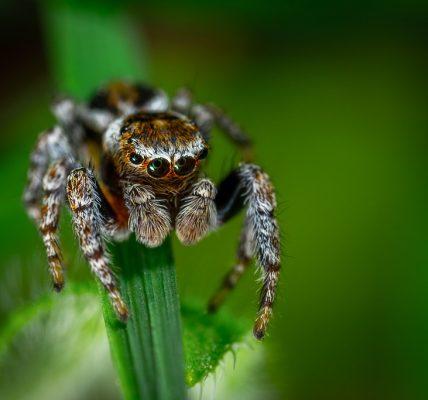 czy pająki to owady
