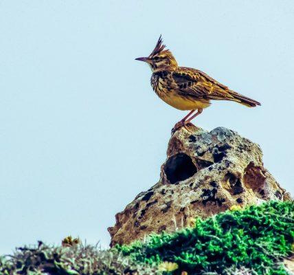 jaki ptak śpiewa w marcu?