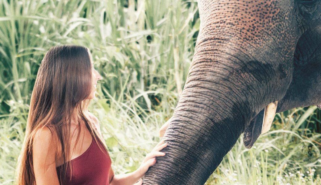do czego służy słoniowi trąba
