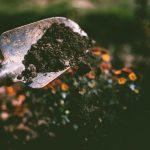 w jaki sposób powstaje w glebie próchnica