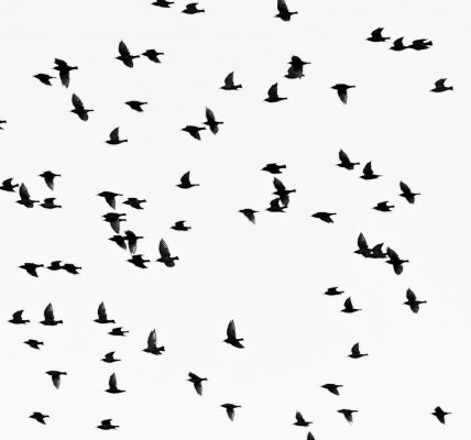 ciekawostki o ptakach