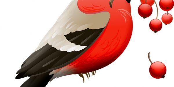 czerwone ptaki w polsce