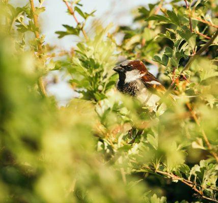 Ptak podobny do wróbla