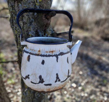 w czym parzyć herbatę
