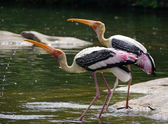 ptak z najdłuższym dziobem