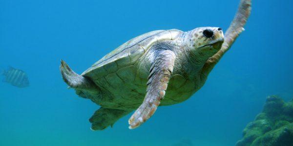 czy żółwie mają zęby