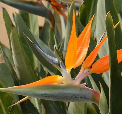 pomarańczowy ptak