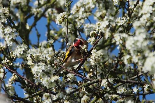 ptak z czerwoną głową