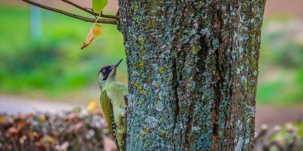 zielony ptak