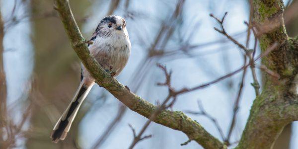 mały ptak z długim ogonem